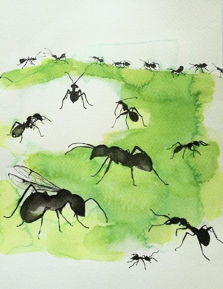 Mieren - ants
